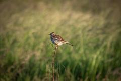 DSC_4660 (Evo800) Tags: walks cooper sky grass cloulds sunset water forth scotland nikon d610 deer skylark