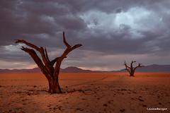 dancing trees (Anne.Berger) Tags: namibia namibrandnaturereserve kanaan dancingtrees namib desert trees deadtrees wüste abgestorbenebäume sunset sonnenuntergang