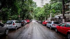 Avenida Arruda Botelho (Laércio Souza) Tags: laerciosouza arrudabotelho ponteestaiadapinheiros ponteestaiada rosa flower reciclagem ferrovelho sucata sucataspontocom