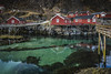 Life that clings to rocks (Sizun Eye) Tags: rorbu lofoten archipelago norway norvège europe pilotis piles architecture wooden rocks sizuneye tamron2470mmf28 nikond750 nikon d750 nisifilters gettyimages