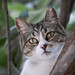 Cat+in+a+Tree+-+Garden+District+-+New+Orleans%2C+LA