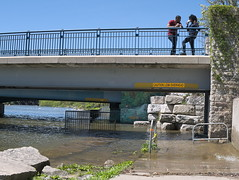 Chatting. (Leszek Wronski) Tags: leszekwronski panasoniclumixdmcg7 panasonicdmcg7 panasonicg7 panasonic g7 mft m43 lumixdmcg7 lumixg7 lumix lake water bridge panaleica25mmf14 flood portcredit chatting