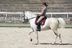 _DSC8756.jpg (Malc H) Tags: spanishridingschool vienna lipizzan lipizzaner lipa lipicanec stud studfarm horse stallion foal lipica karst slovenia places ljubljana europe