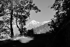 Route to the mountains, a monolandscape. (draskd) Tags: monolandscape mono landscape binsar mttrishul trishul roadtobinsar waytobinsar binsarroad binsarhillside binsarroute nikon draskd uttarakhand kumaon snowcappedmountains himalayas mountainpeaksofindia india himalayanpeaks blackandwhitelandscape bw kumaonhills kumaontravel nature scenery scenic natureandlandscapes