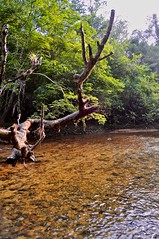 Kendjam - Iriri River (Kendjam - The Kayapo Legacy) Tags: amazon brazil iriri jungle rainforest kendjam kayapo southamerica tribe untamed untamedangling