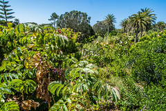 Green View H Tresco  2017 (davidmcbridephotography) Tags: tresco gardens flowers sea water sunshine travel colour vivid squirrell succulents plants trees palms boating isles scilly scillies united kingdom holiday islands scenic walking outdoors trecking rambling birds flower
