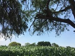#campo #slp #sun #day (luise.j.alvarez) Tags: campo slp sun day