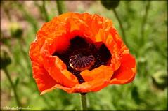 DSC_8775 (facebook.com/DorotaOstrowskaFoto) Tags: ogródbotaniczny kwiaty powsin warszawa
