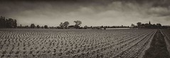 In Flanders Fields (Eric@focus) Tags: flanders village church trees farm belgium westhoek border sky clouds silverefexpro2 nikond7100 inexplore explored panorama ice aspectratio nikfilters sharpenerpro path walk lines oblong greatphotographers noiretblanc