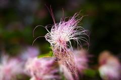 Jardim Botânico (m.jsilveira) Tags: flôres jardimbotânico sãopaulo