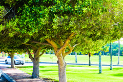Trees of the Eden ! (Muhammed Fawaz Sherief) Tags: green eden saudi ksa light