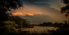 Chasing the Dream (JDS Fine Art Photography) Tags: light clouds lake mangolake landscape cloudscape waterscape inspirational beauty naturesbeauty nature trees naturalbeauty illumination