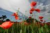 _AD16099_new (Antonio De Martis) Tags: altreparolechiave fiori papaveri