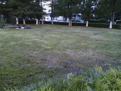 IMG13437 (chicore2011) Tags: littlepark freshlycutgrass