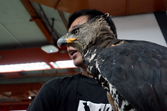 #7 Birdman (jobChaowadee) Tags: bird hawk eagle birdman streetphoto street bangkok thailand