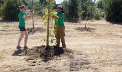 Stevens Creek Trail Planting 6-17-17 (CANOPY PHOTOS) Tags: treeplanting nature creek trees community maika horjus
