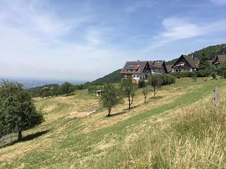 a summer meadow (1)