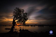 Lone (Darrell Neo) Tags: red lone tree changi singapore beach boardwalk water sea sunset colors rocks longexposure haida haidafilter nikon d750 1635mm 10stops
