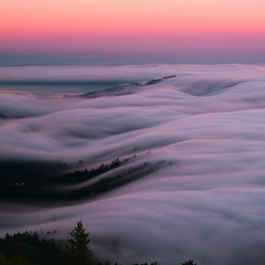 Liquefy (Maddog Murph) Tags: sky san francisco fog foggy mist clouds shroud california bay area pink flow mt tam tamalpais mount sf water tree sunset cloudy