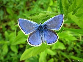 Butterfly 1254