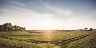 German cornfield...