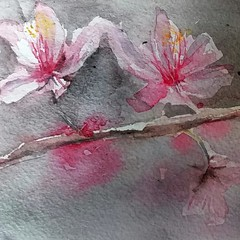 Cherry blossom (sushipulla) Tags: cherryblossom hanami cherry flowers fiori watercolours watercolors painting artwork art nature
