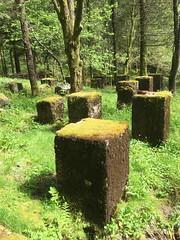 Forlatt -|- Abandoned (erlingsi) Tags: erlingsi iphone abandoned decay green grønt bergen utløebotn norway isdalen