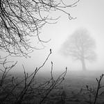 Blickling Wood 28/03/2017 thumbnail