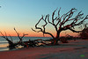 Driftwood Beach sunrise Jekyll Island, GA (MLMphotoga) Tags: mlmphotography melanielmcculloughphotography southgaphotographer landscapephotographer scenicphotographer jekyllisland driftwoodbeach beachsunrise jekyllislandsurise