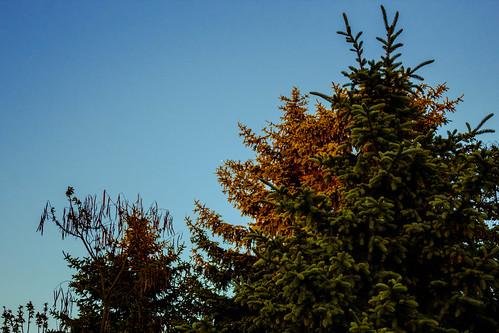 Bäume Wixhausen