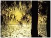 Sunset at Turgutreis. (@ tameristan) Tags: sunsetpics sunset çam ağaç deniz güneş günbatımı tameristan sarı trees sea sun yellow landscape manzara nature doğa turgutreis kodak kodakmoments