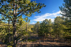 pike-national-forest-2017-hdr2-flickr (Wildsight Photography) Tags: pikenationalforest colorado woodlandpark rampartrange mountains pikespeak trees sky clouds pine