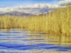 Golden water reeds (maios) Tags: prespes agiosakhillios greece goldenwaterreeds golden reeds water blue mountain clouds winter december maios nature olympus e400 olympuse400 macedonia
