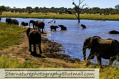 _DSC4949 copy (naturephotographywildlife) Tags: kruger wildlife scenery animals birdlife a99ii africa park