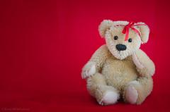 ted in the red (sure2talk) Tags: tedinthered teddy designerteddybear teddybear red nikond7000 nikkor85mmf35gafsedvrmicro