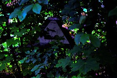 Ethereal (Bodomi) Tags: ethereal colours green trees sign