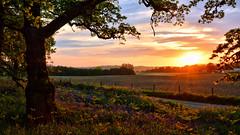 Rural sunset 2 (andrewmckie) Tags: kinclavenwoods kinclaven perthshire sunset scotland scottish scottishscenery scenery landscape outdoor