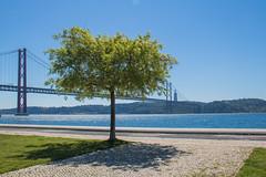 Tree (Infomastern) Tags: 25deabrilbridge 25thofaprilbridge lisboa lisbon lissabon ponte25deabril portugal riotejo river tagus tagusriver bridge bro flod ponte tree träd vatten water