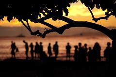 (Zebulon Dave) Tags: hawaii honolulu oahu waikikibeach sunset silhouette tree people water beach violet yellow usa unitedstates img3325rlexported