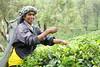 Sri Lanka, tea pickers (18) (walterkolkma) Tags: srilanka tea pickers teapickers centralhighlands nuwaraeliya strathdon teaestates women laborers tamils sonya6300