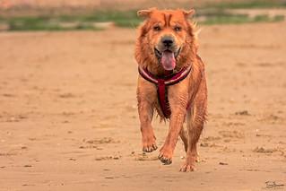 Ted on the beach