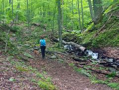 P5282362 (Jean Arf) Tags: memorialdayweekend spring 2017 virginia bathcounty douthatstatepark trail hike stream creek nora pickles dog pitbull