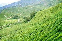 boh tea plantation... revisited (jazzspeed) Tags: malaysia travelphotography travel landscape teaplantation bohteaplantation mountain