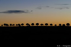 Sonnenaufgang / Sunrise (R.O. - Fotografie) Tags: sonnenaufgang sunrise bäume trees sun sonne panasonic lumix dmcfz1000 dmc fz1000 fz 1000 rofotografie natur nature outdoor landschaft landscape