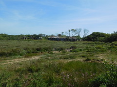 Old buildings , Windmill Farm 14 June 2017 (ecology_garden) Tags: windmill farm cornwall lizard uk honey bees cornish heather