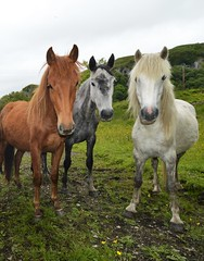 3 of a kind. (carolinejohnston2) Tags: fermanagh countryside animals horses equine pets ireland