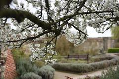Waltham Abbey (rickymulan) Tags: london march 2017 nikond750 nikon walthamabbey