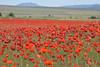 16052017-DSC_0240.jpg (stephan bc) Tags: landschap yecla