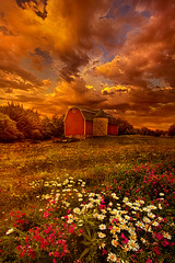 In A Heartbeat (Phil~Koch) Tags: beautiful peace hope love joy dramatic unity trending popular canon camera rural fineart arts shadow sun sunrise woods forest flowers light green wisconsin shadows outdoors spring trees farm barn red