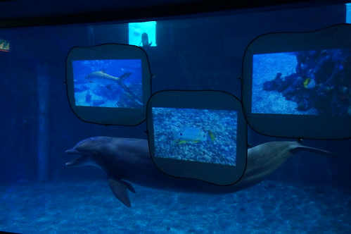 """Epcot: Dolphin Training Session • <a style=""""font-size:0.8em;"""" href=""""http://www.flickr.com/photos/28558260@N04/33955578203/"""" target=""""_blank"""">View on Flickr</a>"""